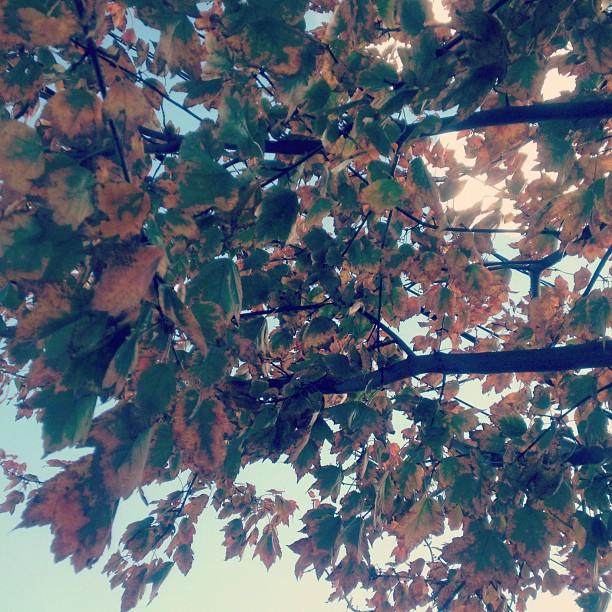 Somewhere in Boston. (Taken with  instagram )