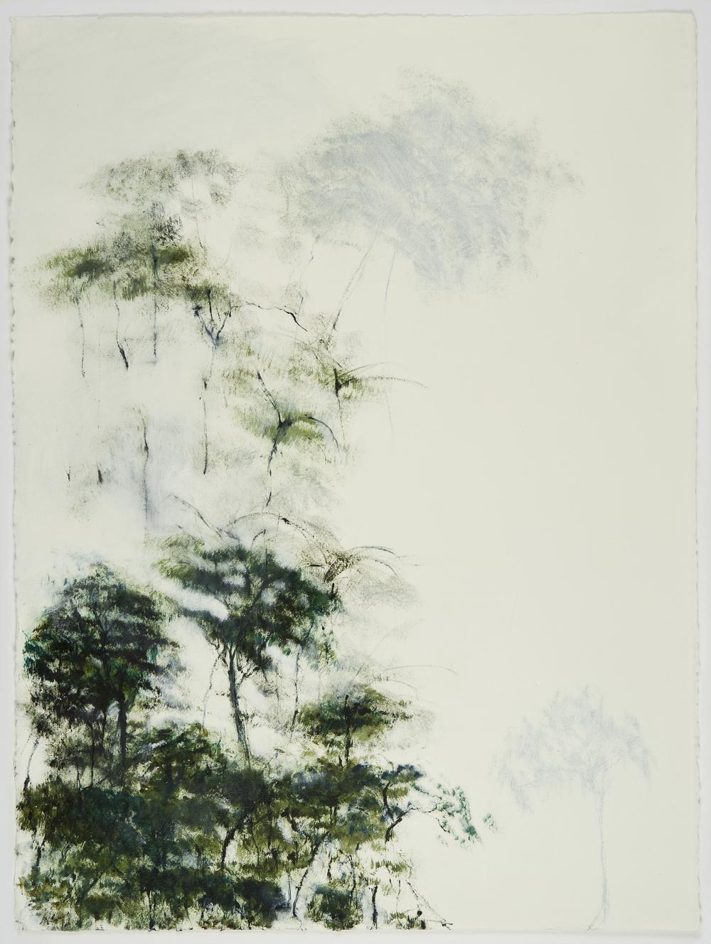 Trees and Fog 1 LG.jpg