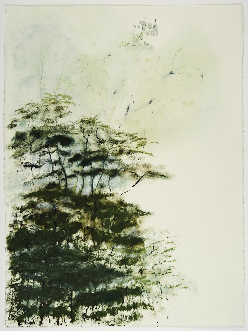 Trees and Fog 2 med LG.jpg