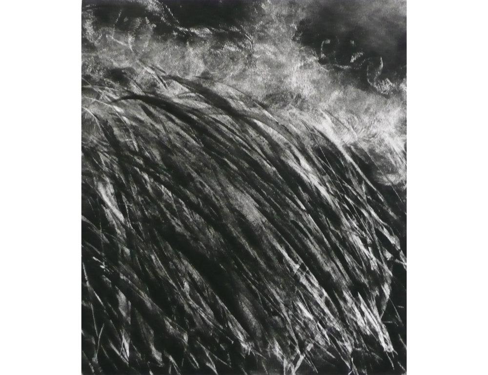 Dune Grasses 2_fatterfatterwhitesideborder-01-01-01.jpg