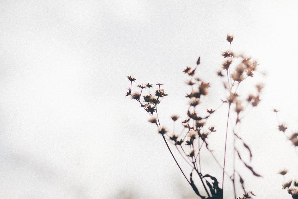 florals-162.jpg