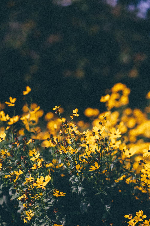 florals-165.jpg