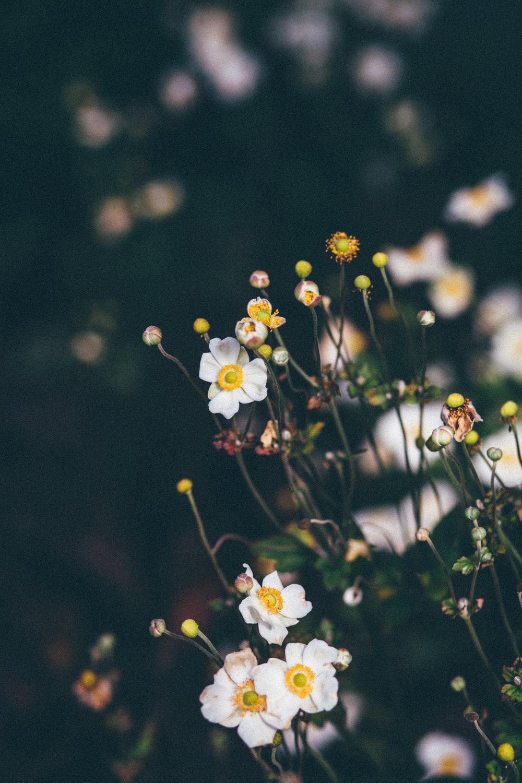 florals-167.jpg