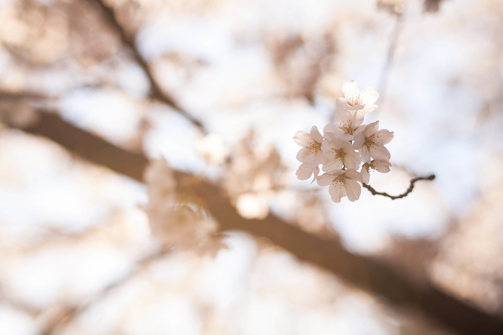 theGirls_spring_2014-22.jpg
