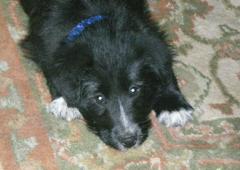 Annie - puppy