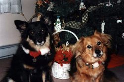 Taffy&VioletChristmas2007.jpg