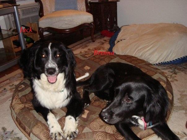 Brenna & foster dog Jack.jpg
