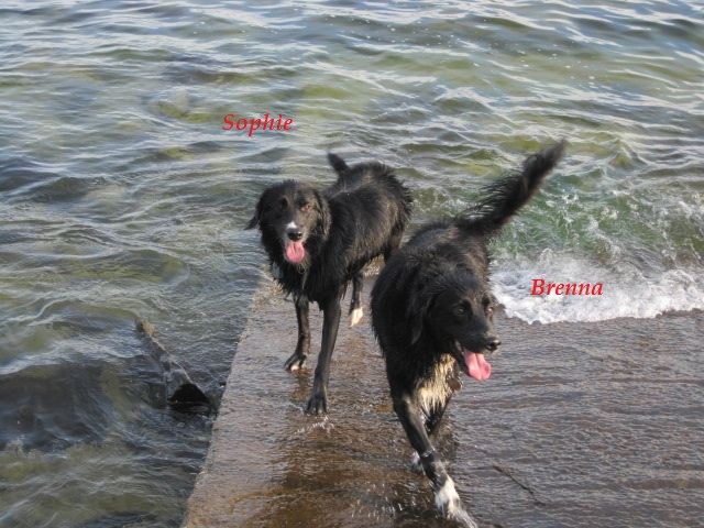 Sophie & Brenna swimming.JPG