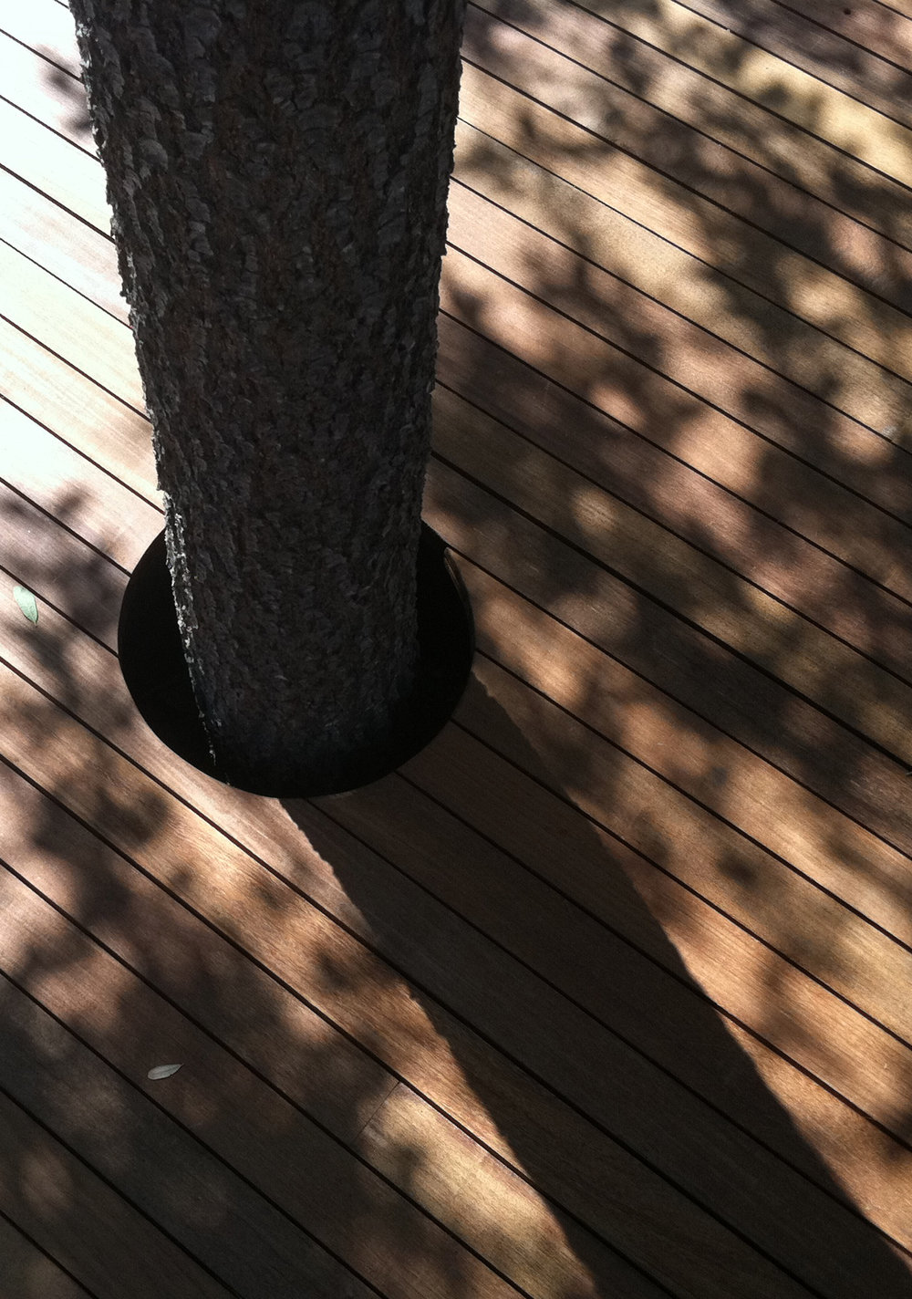 treehole.jpg