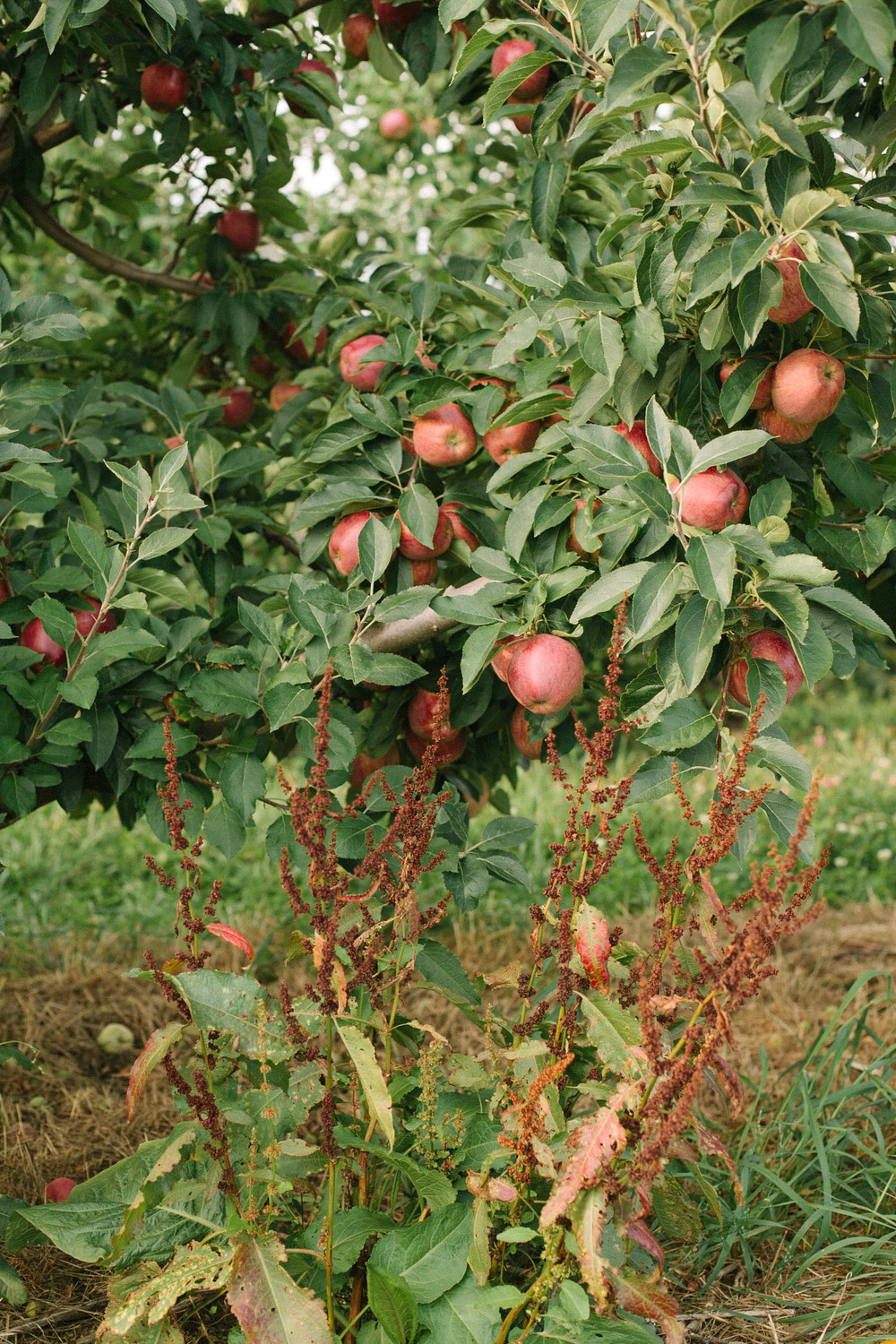 Apples are best picked in the Fall - September is just around the corner.