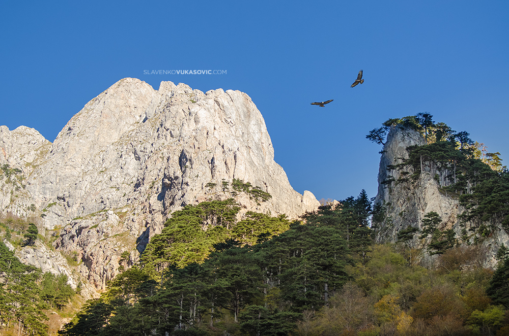 Hawks-at-Sutjeska-canyon.jpg