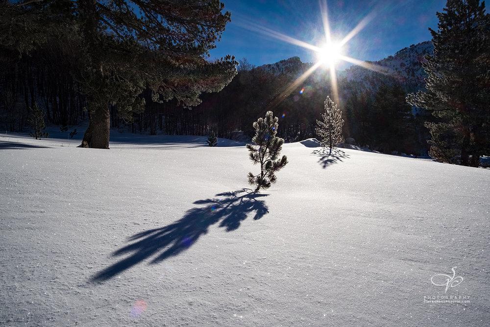 Zimsko jutro u Dobrom dolu