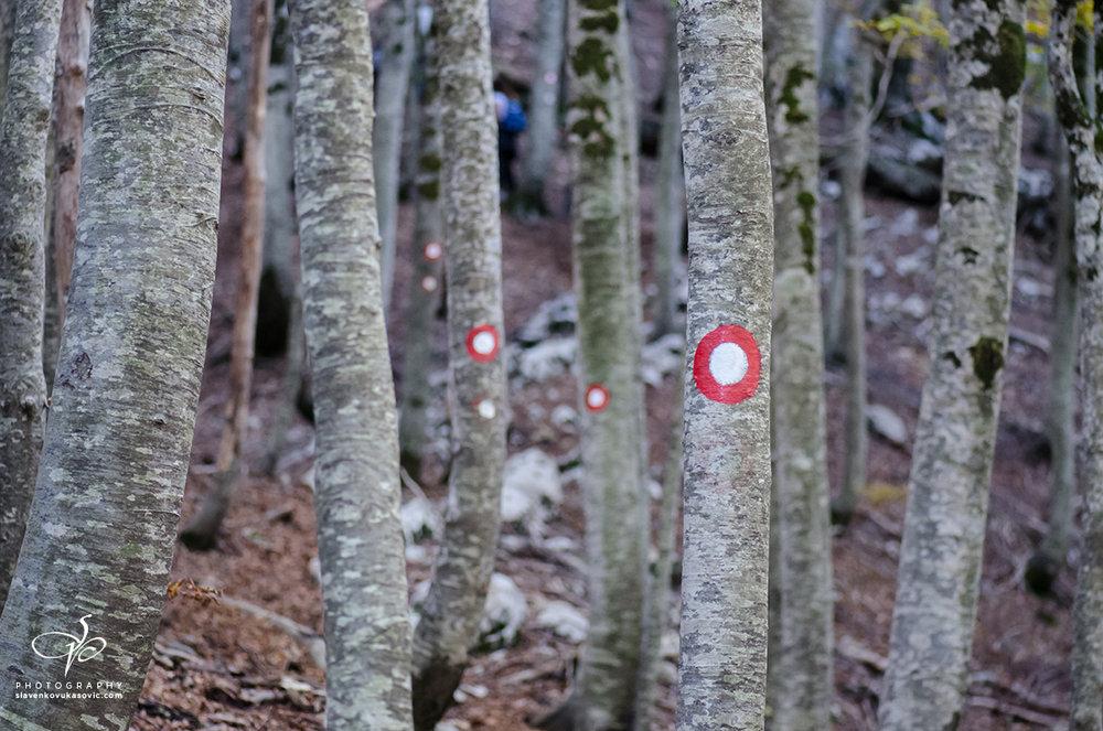 Uredno markirana planinarska staza ka Vučjem zubu (zasluga PD Vučji zub, Trebinje)