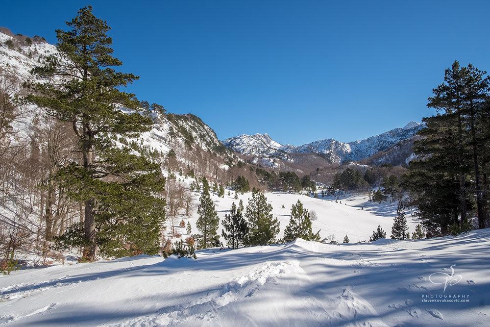 Pirina poljana zimi