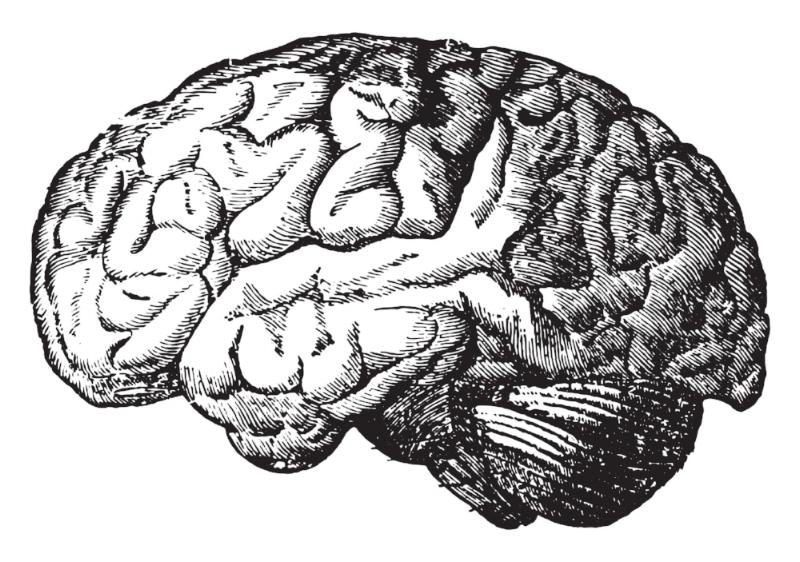 Brain silhouette.jpg