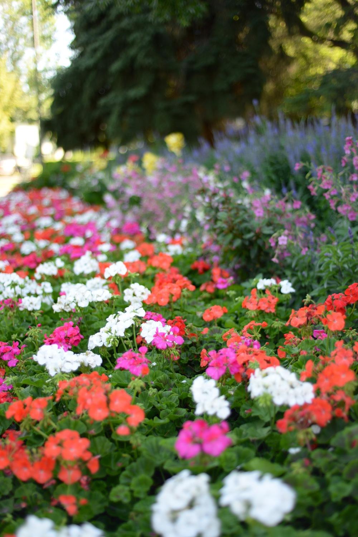 edmonton muttart flowers