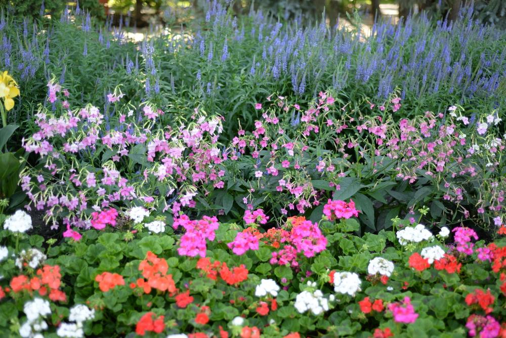 edmonton flowers