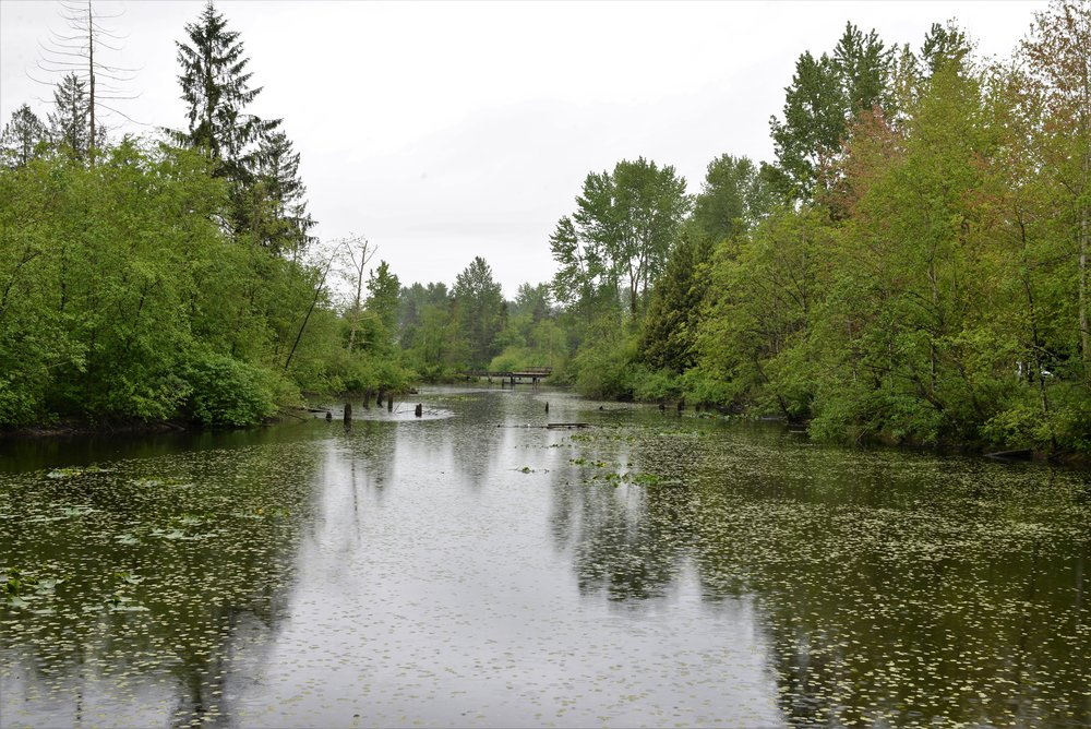 fishtrap creek abbotsford