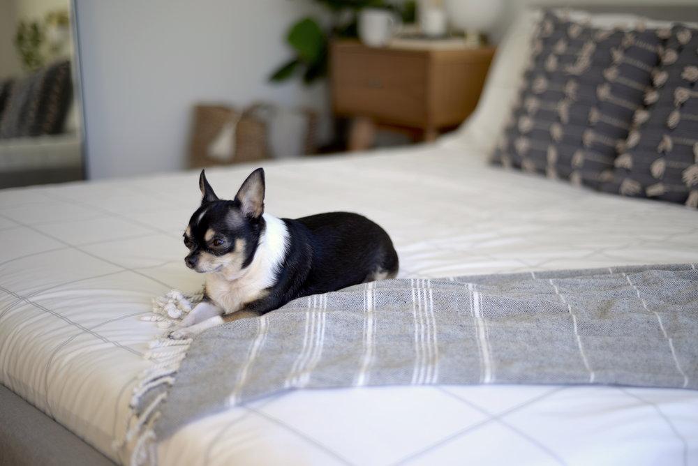 minimalist bedding