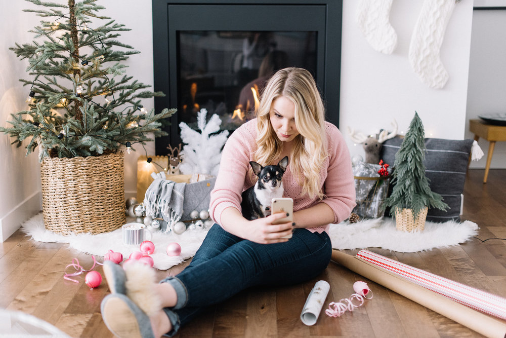 merry christmas, chihuahua