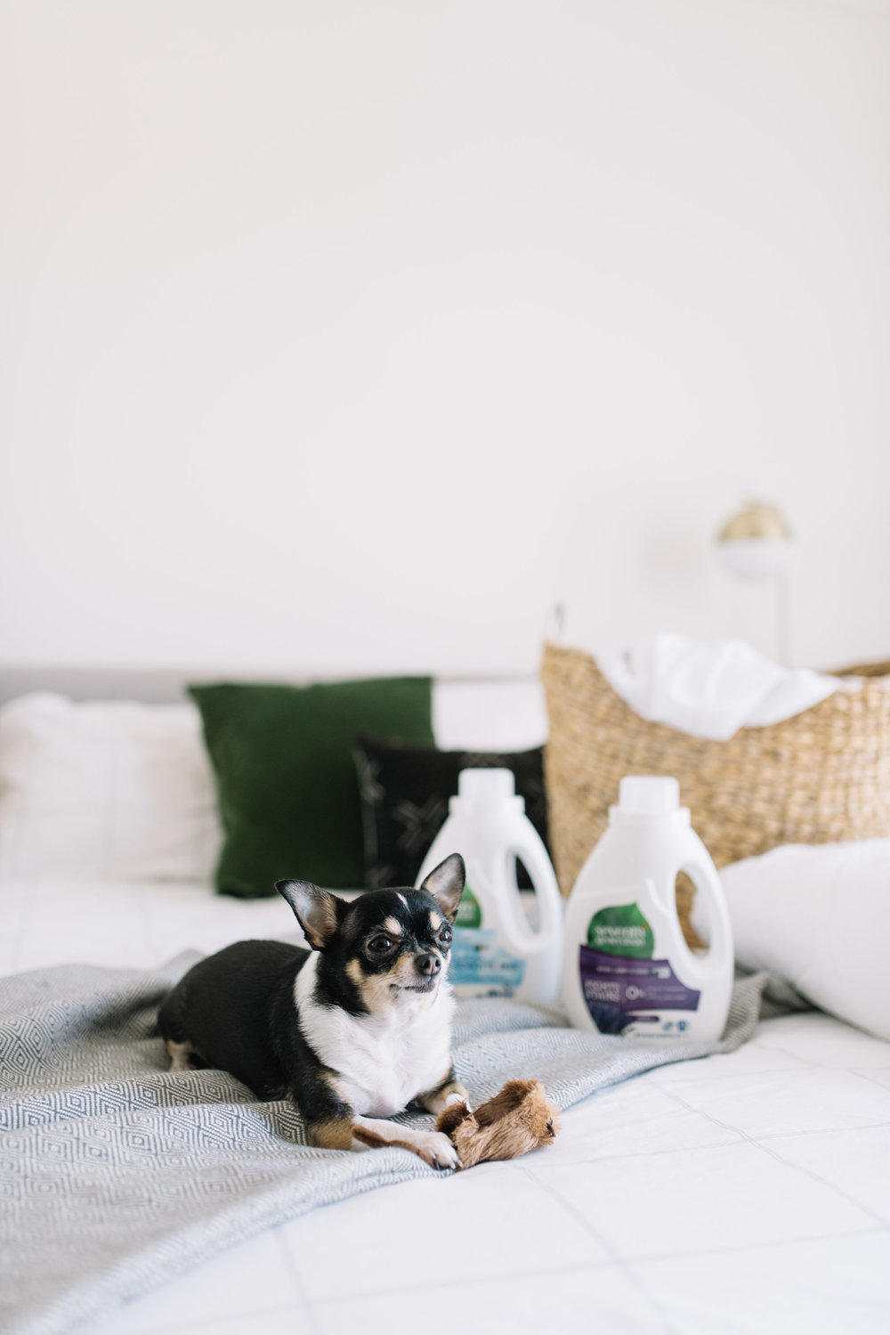 earth month, pet friendly products