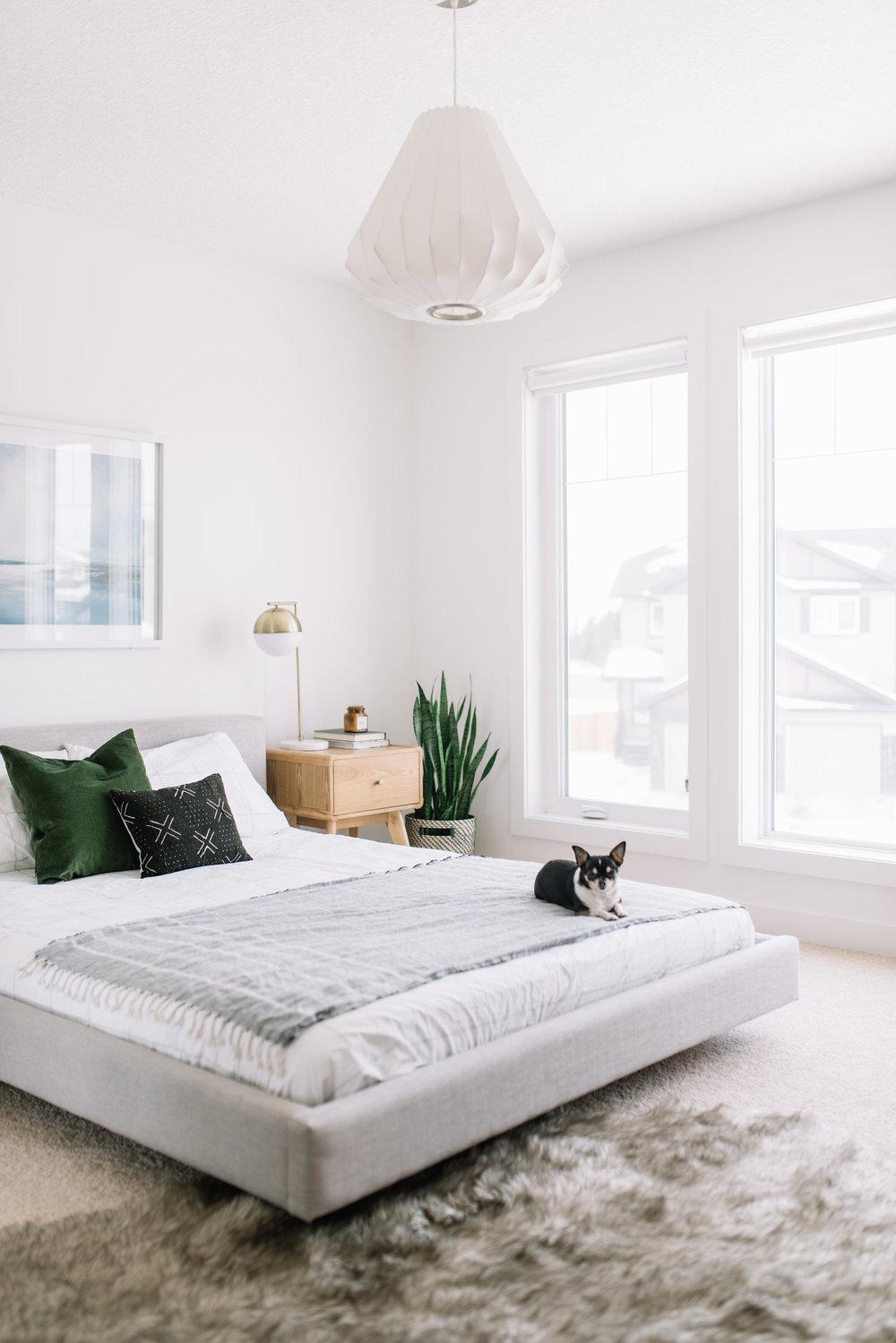 pet friendly interior design tips
