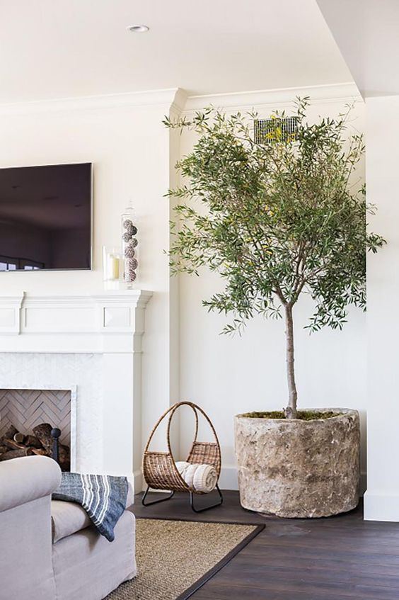 interior design trend, olive tree