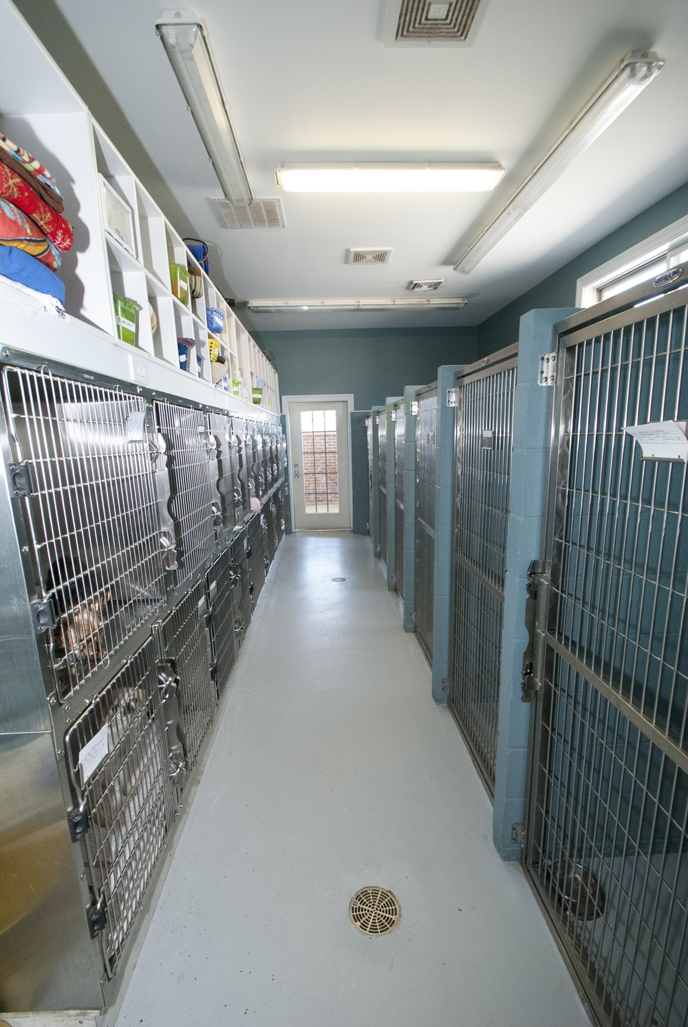 Our facility has 23 dog kennels/Runs and 18 cat Cages.