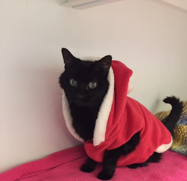 Diva Christmas.jpg