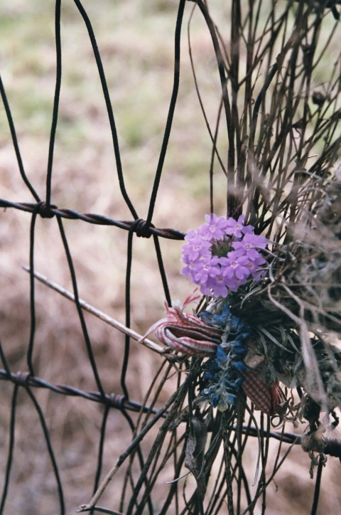 FenceFlowers (Small)
