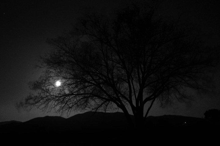 photography: Michael Bruner