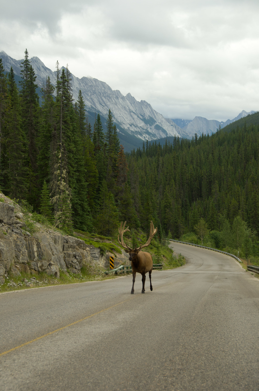 Fellow traveler, Jasper National Park, Canada, July 2012
