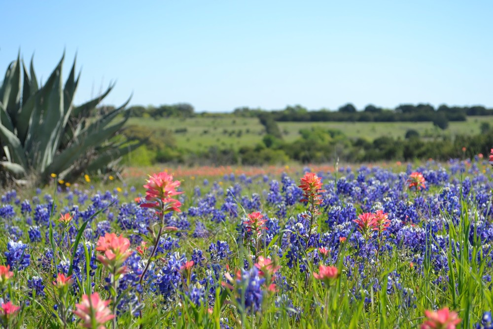 Speaking of love, it's bluebonnet season.  Texas, you beautiful thing.  (photo:  Andy Bruner, near Granbury TX)