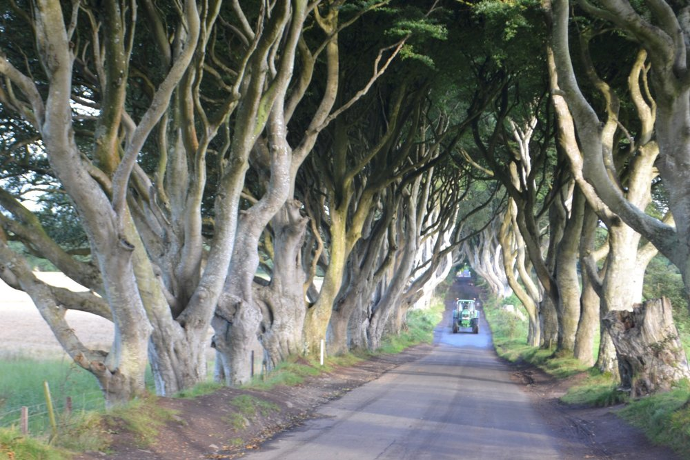 Dark Hedges, photo: Andy Bruner