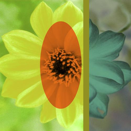 H) orangeyellowflower.jpg