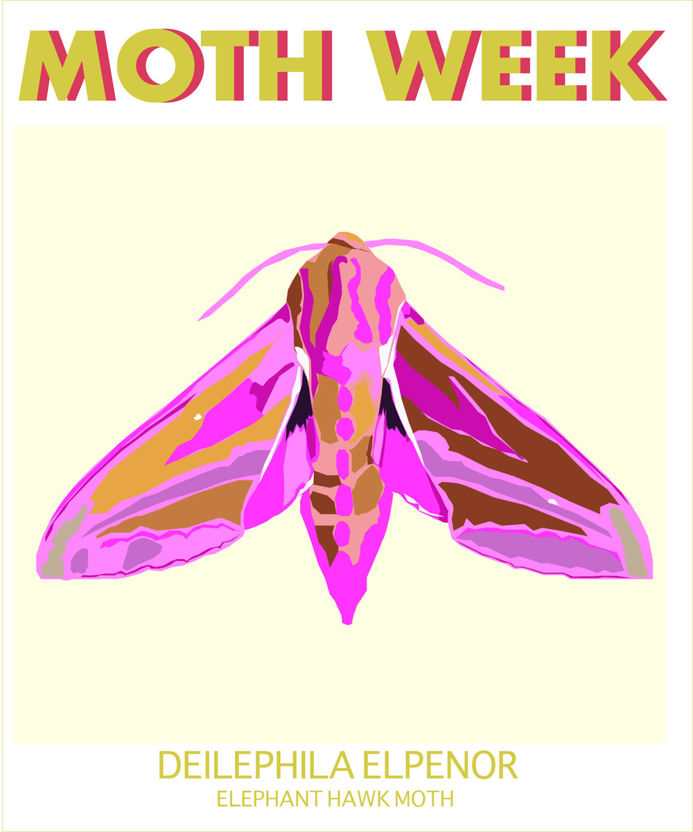moth week Elephant .jpg