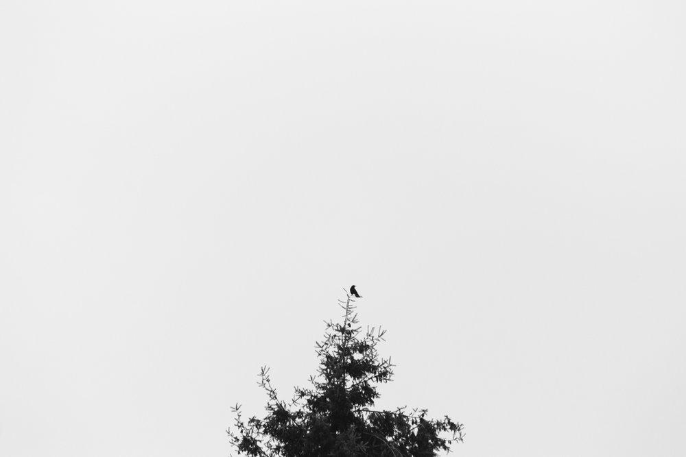 026 | 365
