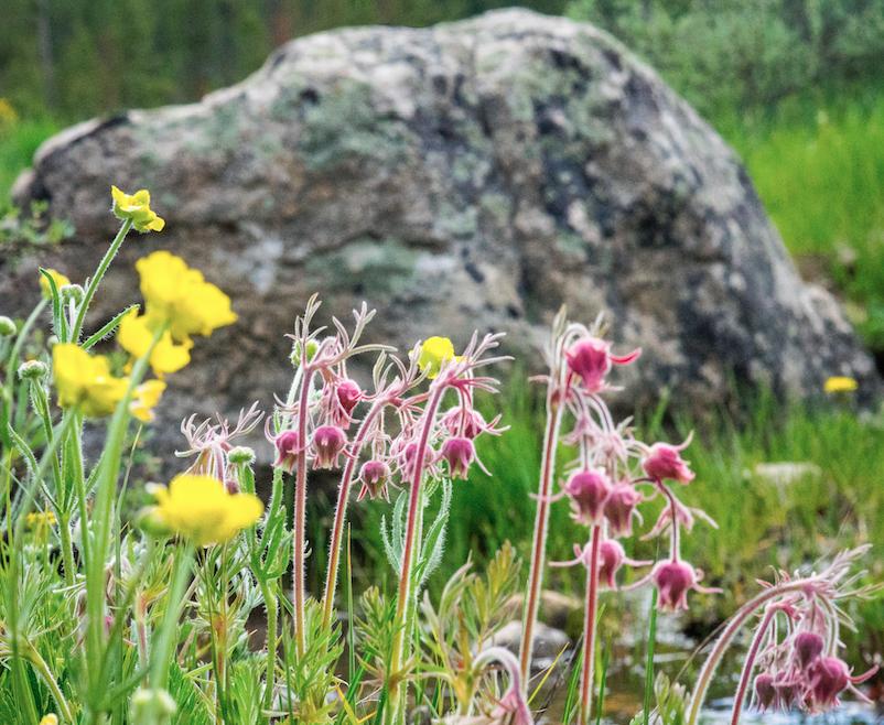 SPRING FLOWERS IMAGE BY WWW.FRANKIEBOYPHOTOGRAPHY.COM
