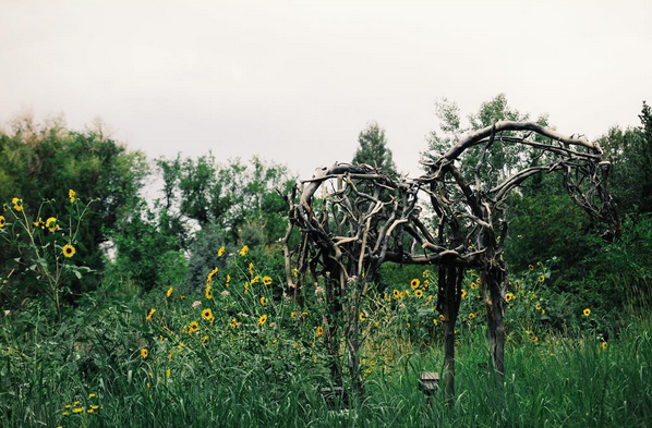 emily sellers photography the denver botanic gardens the nature of horses
