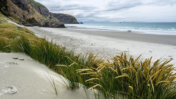 ARAMOANA BEACH // DUNEDIN, NEW ZEALAND