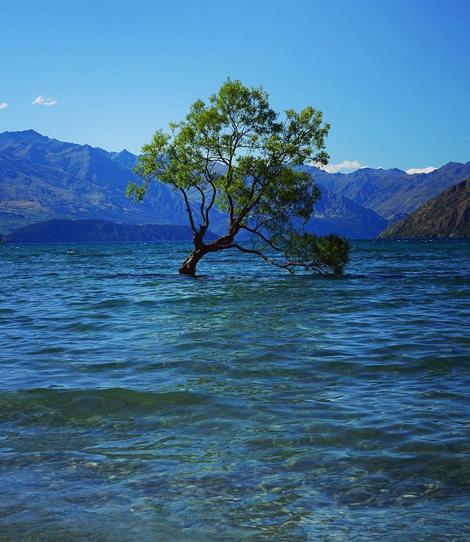 THAT WANAKA TREE ENJOYING A BEAUTIFUL SUMMER DAY | LAKE WANAKA, NEW ZEALAND