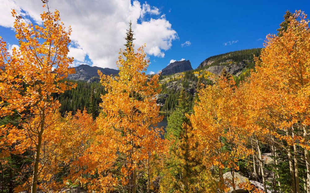 BRIGHT ORANGE ASPEN TREES ON THE BANKS OF BEAR LAKE, ROCKY MOUNTAIN NATIONAL PARK, COLORADO
