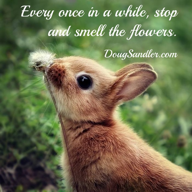 Smell the flowers Customer Service Rules  Nice Guys Finish First Doug Sandler