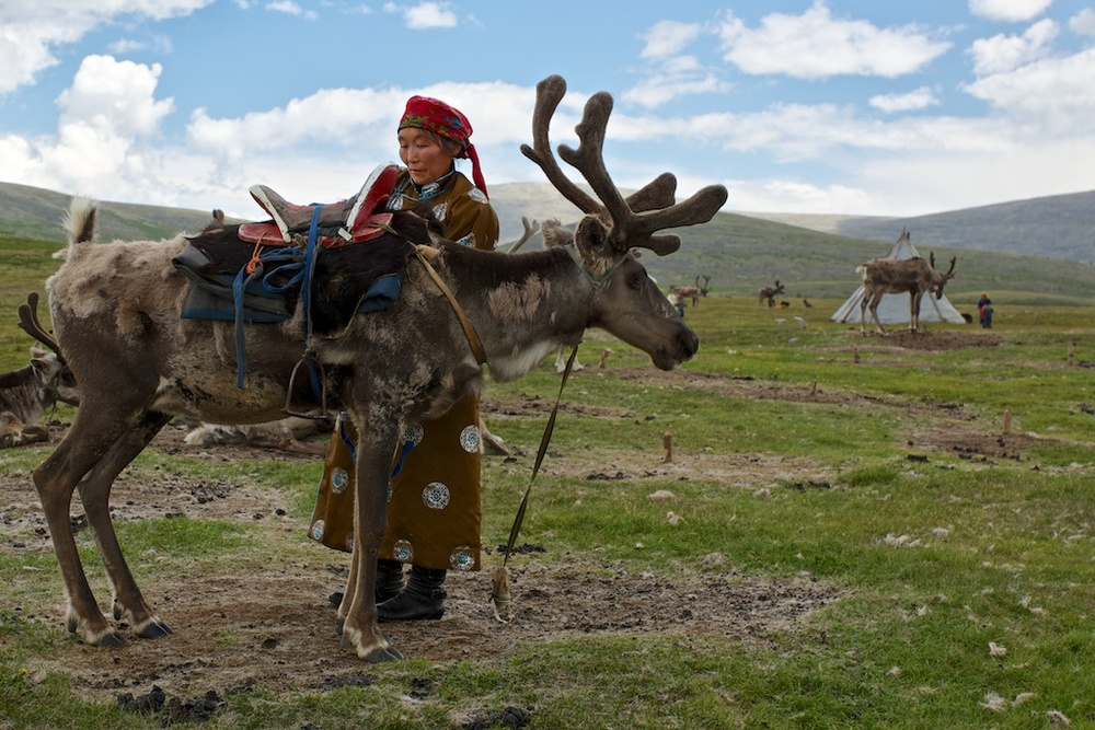 Mother prepares the reindeer that will carry her daughter's belonging to her new home.