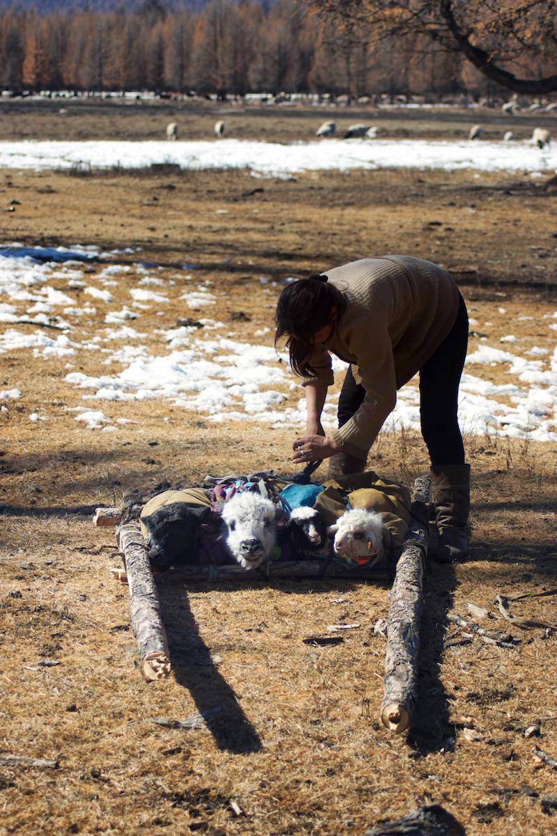 Khasar_S_Migration_III_Huvsgul_Mongolia_Spring_2014.jpg