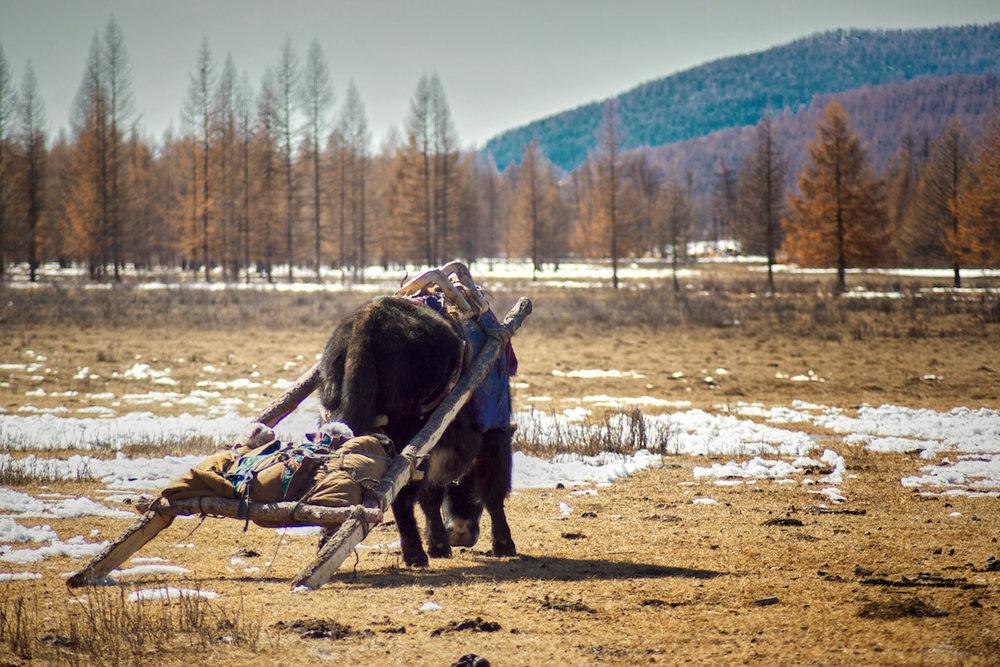 Khasar_S_Migration_IV_Huvsgul_Mongolia_Spring_2014.jpg