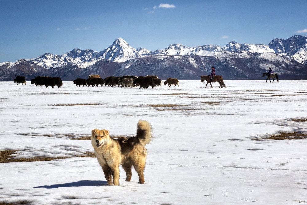 Khasar_S_MigrationHoridolSaridag_Huvsgul_Mongolia_Spring_2014.jpg