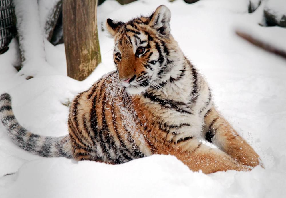 Findeltiger Diego entdeckt den Schnee. Foto: Andreas Klug/cam.cop media
