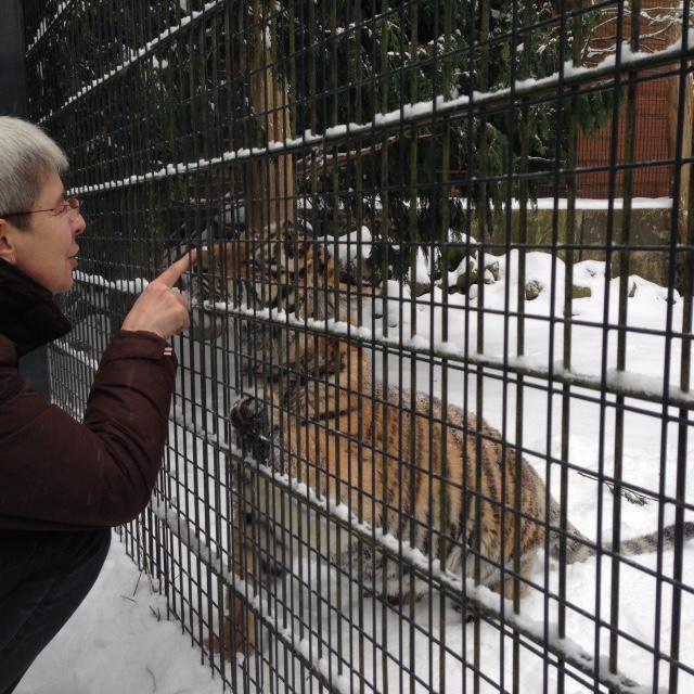 Tigermama Doris Tesch begrüßt ihren Kleinen. Foto: Maria