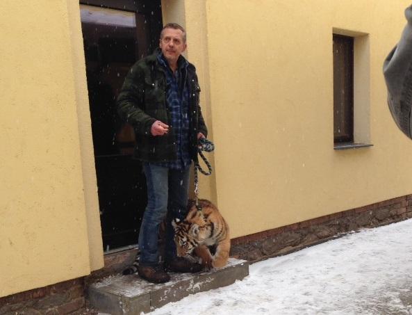 Mit Tigerpapa Renato Rafael auf dem Weg zum Außengehege-Spielplatz. Foto: Maria